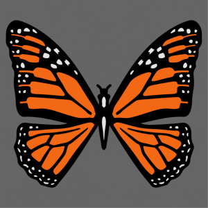 Orange and black butterfly to be printed online on t-shirt or bag. Customize the design and create an original monarch butterfly item.