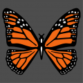 Orange black and white butterfly to personalize online.