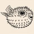 Fugu fish to print on t-shirt. Customize a t-shirt puffer fish, sea and ocean design.